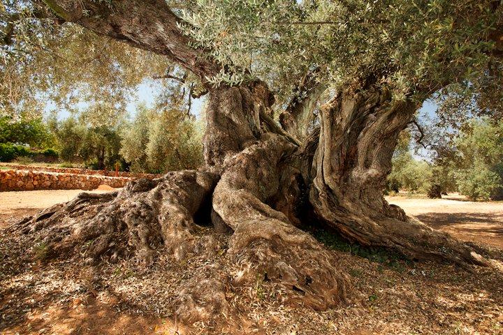 oliverArión