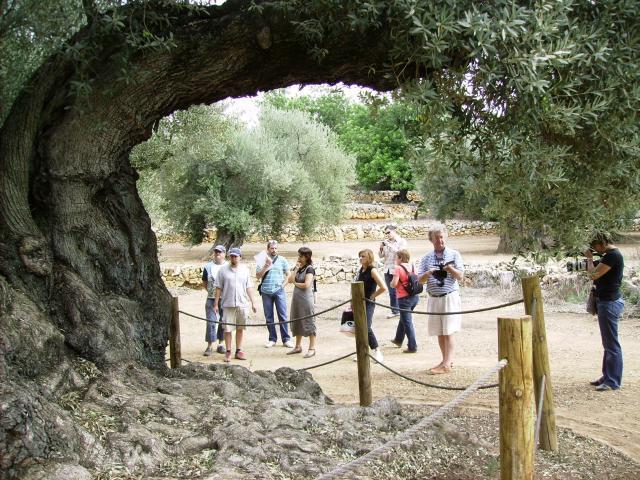 oliveres-ii